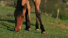horses in the meadow - stock footage