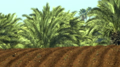 Video panorama of furrows and palm trees shot in Israel. - stock footage