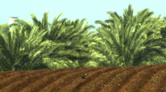 Video panorama of furrows and palm trees shot in Israel. Stock Footage