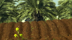 Video of furrows and palm trees shot in Israel. - stock footage