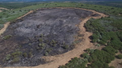 Firebreak around burnt area Stock Footage
