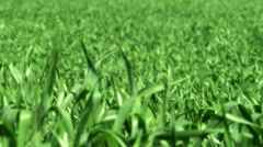 Video of a green field shot in Israel. Stock Footage