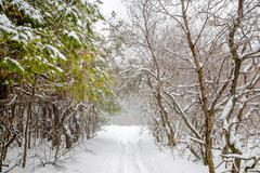 New Year mysterious winter forest with snowstorm and footpath in a fog, Russi - stock photo