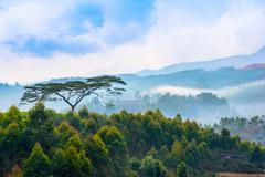 beautiful indian landscape with a trees and mountains in a pre-dawn haze, Ker - stock photo