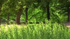 Garden in the town Bad Pyrmont in Germany Stock Footage