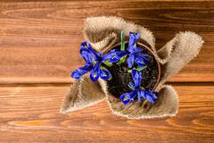 top down of iris flowers in burlap on wooden background - stock photo