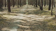 Path In A Pine Forest - stock footage