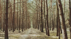 Alley footpath in the pine forest Stock Footage