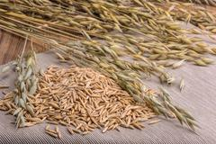 grain oats and ears scattered on the table - stock photo