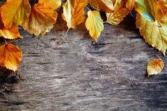 Fallen Leaves Banner Stock Photos