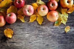 Fallen Apples Stock Photos