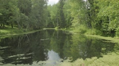 Calm forest pond 4k Stock Footage