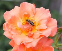 Wasp. - stock photo
