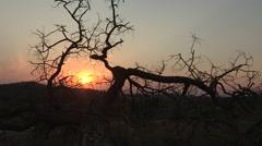 African Tree Sunset Stock Footage