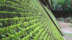 Video of Green moss on step brick walls. Tropical area beauty Stock Footage