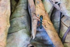 Macro of black ant - stock photo