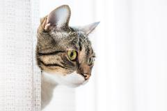 Little gray striped cat Stock Photos