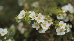 Field of daisy flowers Stock Footage