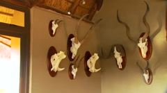 Taxidermy on wall Stock Footage