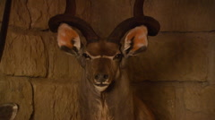 Taxidermy of antelope on wall Stock Footage