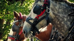 Tram Horses In The Park In Evening Sun Stock Footage