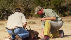 Hunters examining dead animal Stock Footage