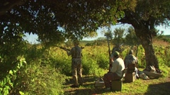 Hunters taking aim and shooting while dove hunting - stock footage