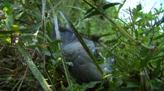 Close-up of dead dove in field Stock Footage