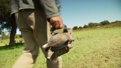 Hunters collecting and gathering dead doves in field Stock Footage