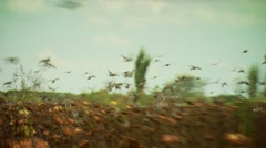 Flock of doves flying over sunflower field - stock footage