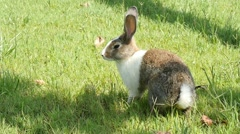 Rabbit in the grass, slow motion Stock Footage