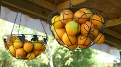 Basket citrus hangs in the shop, decoration Stock Footage