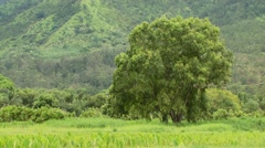 View of field and tree in Bali Hai Stock Footage
