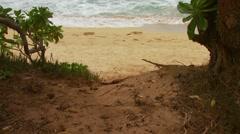Waves crashing on seashore of Kauai Beach Stock Footage