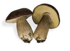 two fungi - stock photo