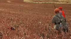 Hunters walking in ranch for pheasant hunting - stock footage