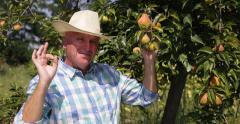 Backyard Garden Pear Tree Orchard Man Gardening Bio Harvest Ok Sign Proud Farmer Stock Footage