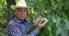 Bio Walnut Tree Orchard Farmer Talking Good Result Man Harvest Organic Raw Fruit Stock Footage