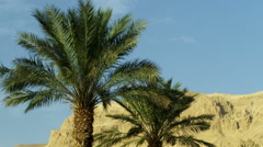 Ein Gedi palm trees and a mountain shot in Israel at 4k Stock Footage