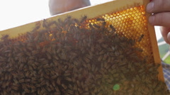 Beekeeper holding a honeycomb full of bees 01 Stock Footage