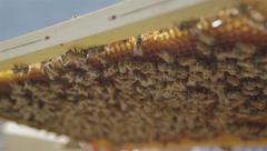 Beekeeper holding a honeycomb full of bees Macro Lens 02 Stock Footage