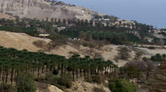 Video of a palm tree orchard in the desert shot in Israel at 4k with Red. Stock Footage