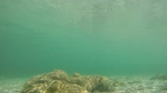Underwater rock in Alghero sea Stock Footage