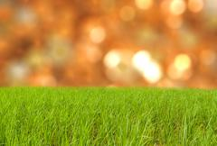 Green grass on land with spring - stock photo