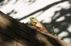 A small lizard sitting on a tree - stock photo
