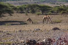 In wildlife sanctuary Stock Photos