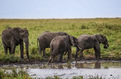 In wildlife sanctuary Kuvituskuvat