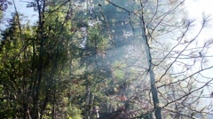 Smoke in the woods. Fire in the coniferous forest. Arkistovideo