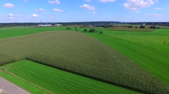 Stock Video Footage of Fly over cornfield in dutch landscape