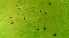Topshot above group of horses in open field. Stock Footage